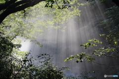 予期せぬ光のシャワー