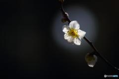 目覚めた春