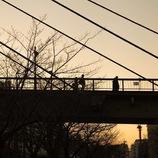 夕陽に架ける橋