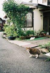 街角スナップ  よその猫