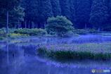 静かな森の中で