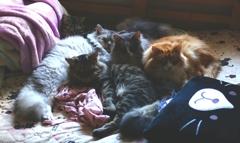 いつもの昼間は猫ベッド(?/ω\?)?夜は人間用