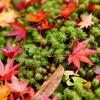 Autamn × Moss