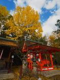 京の秋の赤青黄