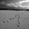 冬の人間交差点