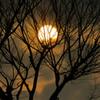 木漏れ日の桜