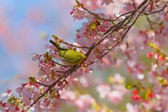 春と戯れる