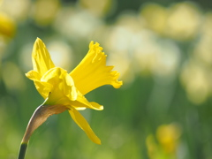 春の歌声高らかに。