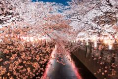 夜桜_目黒川2