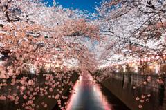 夜桜_目黒川1