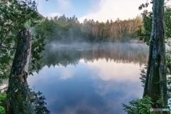 静かな湖畔の森の陰から