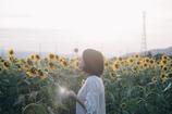 夏花に唄う
