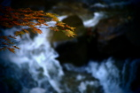 渓流にささやかな彩