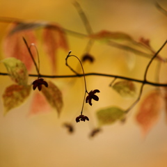 秋色に儚さを添え