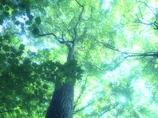 輝く森 -空へ-