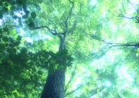 OLYMPUS E-M5で撮影した(輝く森 -空へ-)の写真(画像)