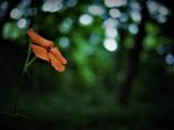 森に一輪の花