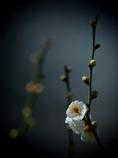 早春の陽 ②