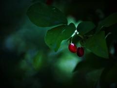 葉影の果実