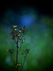 雑草と呼ばれて・・・
