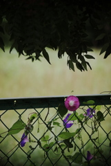 花飾りのフェンス