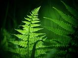 緑色の誘い