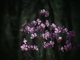 混沌の背景 -散り際の花-