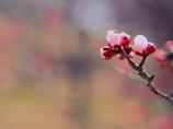 春色♡の休日