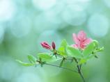 春萌えの色