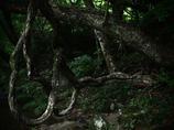 メビウスの樹