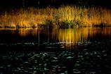 輝く岸辺・金色の針