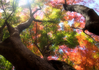 OLYMPUS E-M5で撮影した(秋・彩日  part6)の写真(画像)