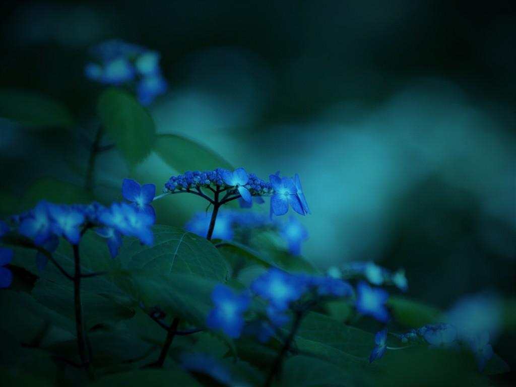 Silent_blue