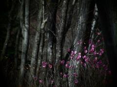 時止まりの森