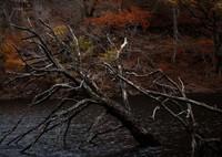 OLYMPUS E-5で撮影した(湖上の朽木 ②)の写真(画像)