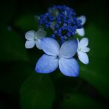変貌 ホワイト~ブルー