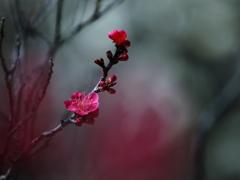 梅香る春 ②
