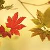 老いを共に - 晩秋 -