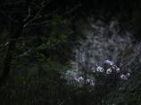 ひっそりとその時を待つ  -散り際の花-