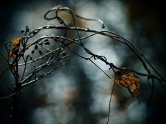 枯葉と蔦と・・・