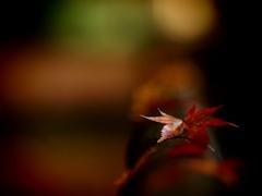 仄かに晩秋の色  其の弐