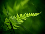 primitive green