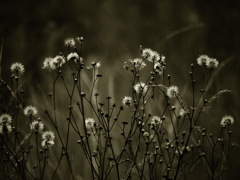 希望の種子