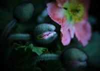 SONY DSLR-A100で撮影した(開花)の写真(画像)