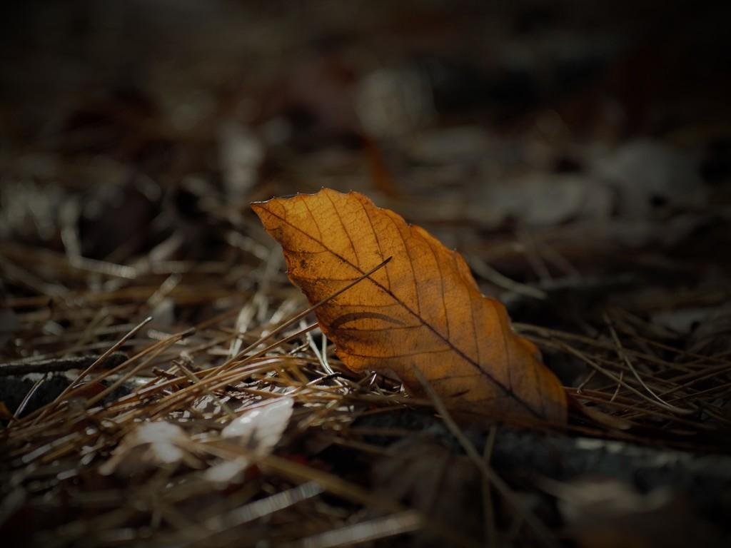落葉の囁き
