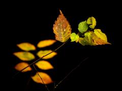 ある秋の日の印象