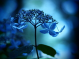 fantajikku blue  ②