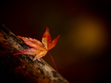 仄かに晩秋の色  其の壱