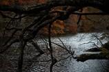 湖上の朽木 ①