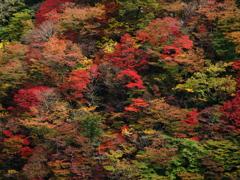 秋・極彩の森 ②